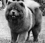 North Eastern Chow Chow Club
